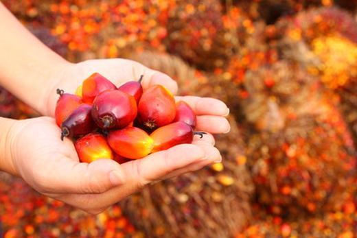 Hände voller Palmfrüchte